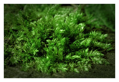 The approaching moss
