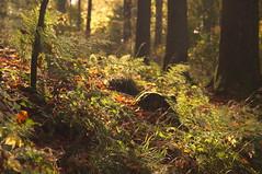 Herbstlicht - autumn light