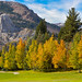 Fall Color In The Eastern Sierra by Mimi Ditchie