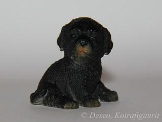 A&A Adopt a puppy