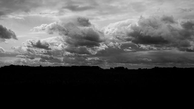 Woodland Sky