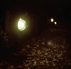 Bright Lights, Polar Nights