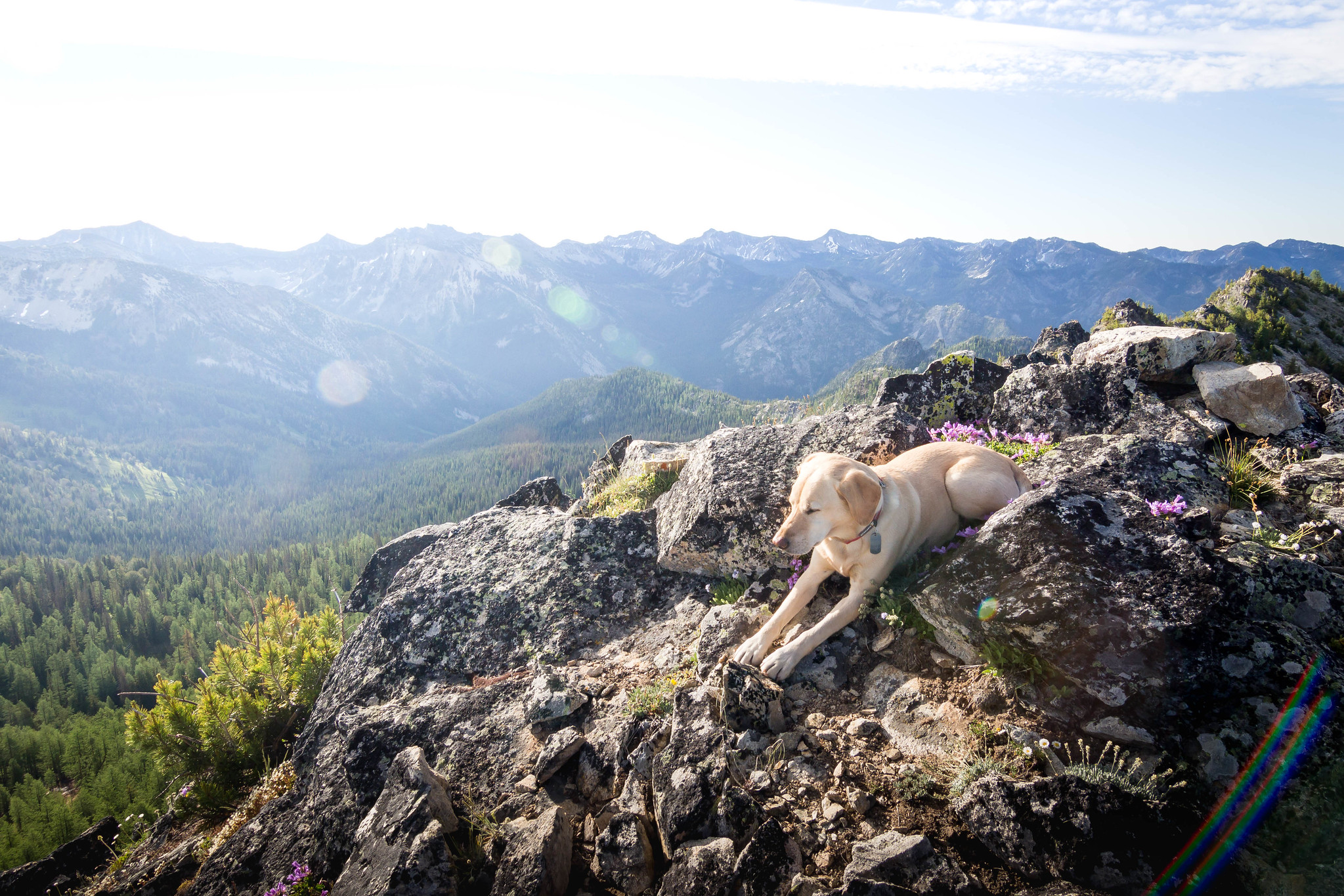 Summit dogs on Baldy Mountain 7810