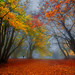 Colors of Autumn by emanuelezallocco
