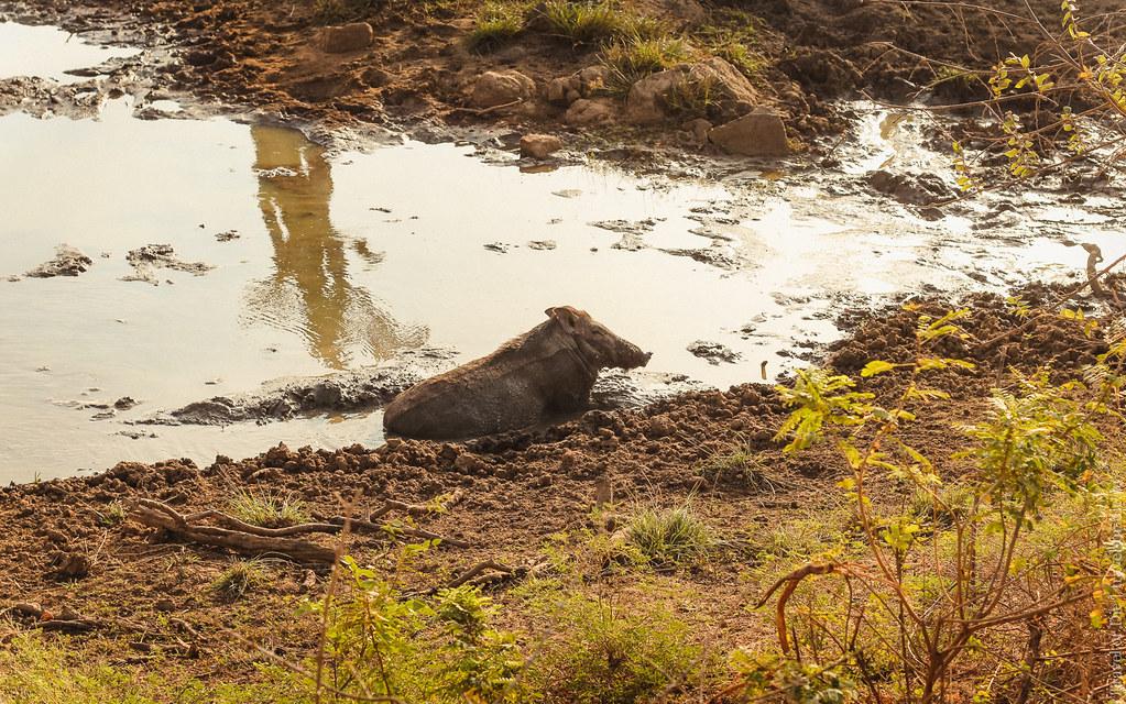 25.06-Yala-National-Park-Sri-Lanka-canon-1500px-019