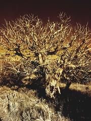 """A Juniper Hallow's Eve"" Skeleton fingers are all that remain, but still I dominate my woodland domain, death to me just moved the pawn, the checkmate comes at Halloween's dawn. For on that day and into its night I'll bring to all a superstitious fright,"