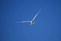 Aves em Vôo