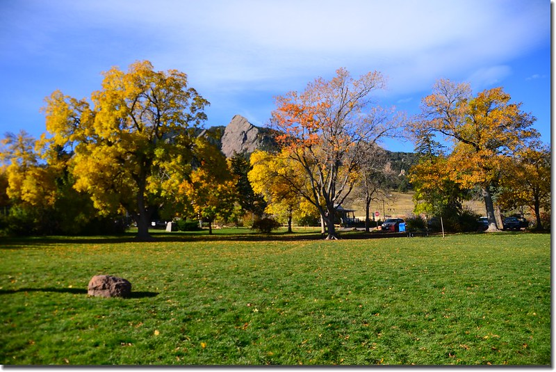 2017 Maple in Fall, Boulder, Colorado  (30)
