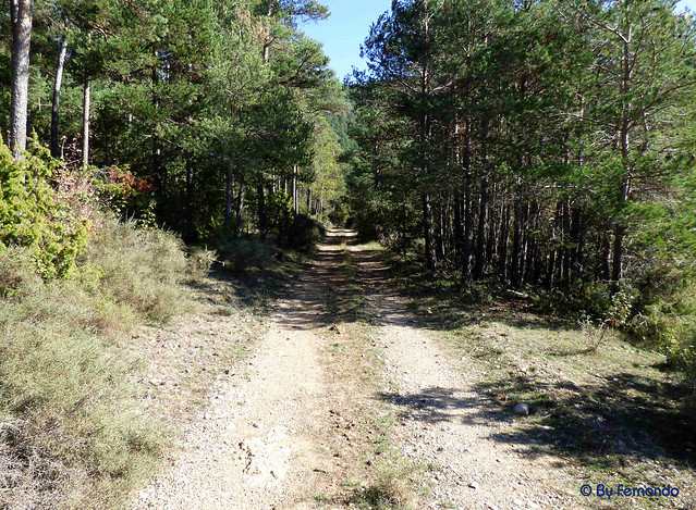 Solsonès 2017 - Exc 05 - Pla de Busa -02- Clots de Revell -02- Pista forestal 01