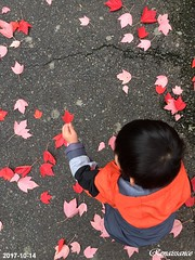 Children and autumn leaves