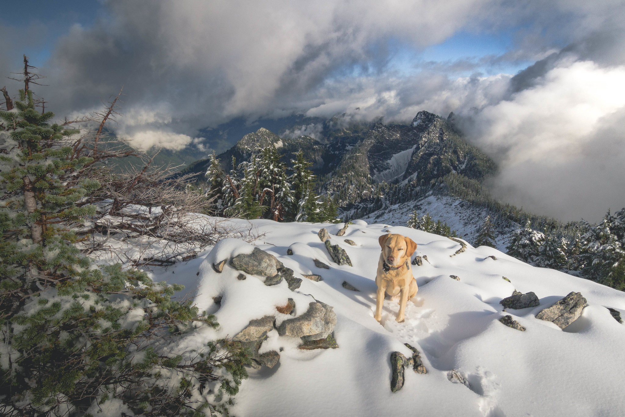 Summit dogs on Caroline Peak