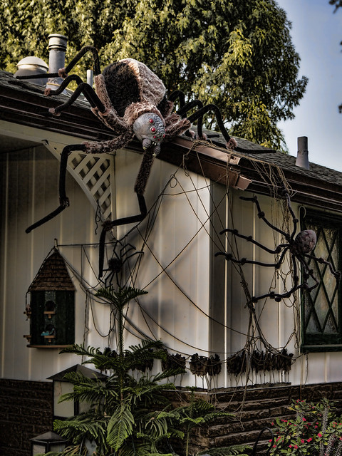 Halloween decoration spiders