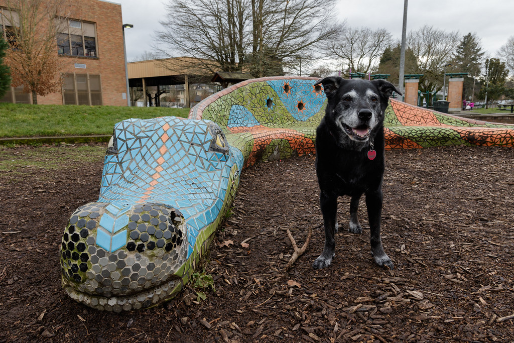 Our dog Ellie stands beside the dragon statue at Irvington School in Portland, Oregon