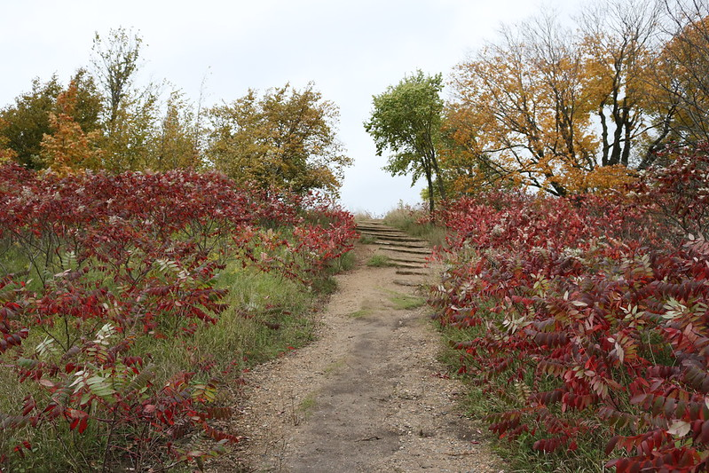 steep dirt path through bright red sumacs