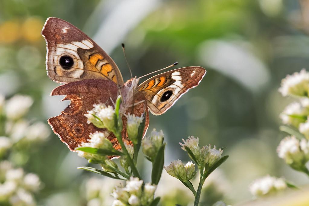 Butterfly-3-7D2-100717