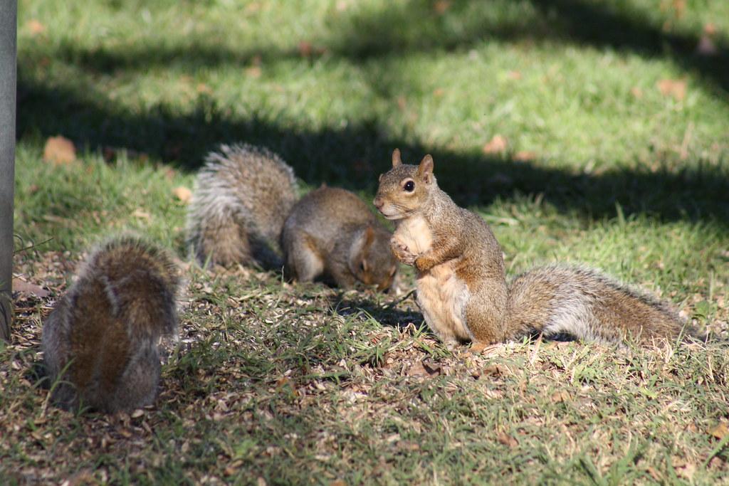 Squirrel Invasion 11