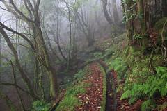 The eerie foggy trail of Levada do Brasileiro