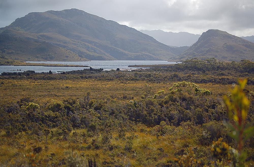 _button_grassland_Tasmania_