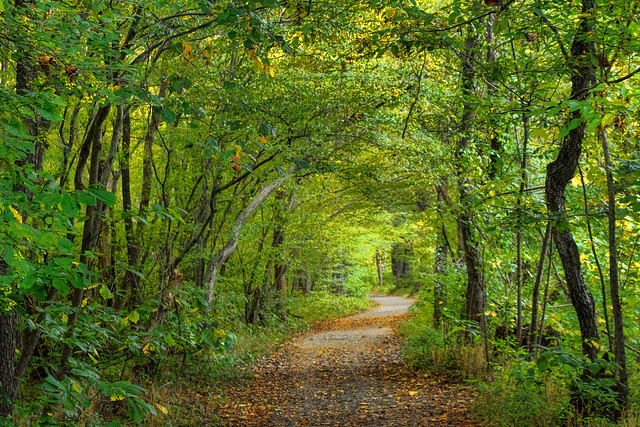Forest Path, First Manassas