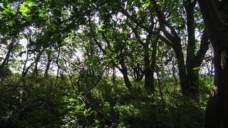Spuren wilder Thiere, ganz furchtbaren Bestien im Wald auf Rügen 02351