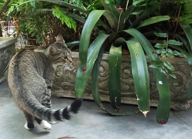 six-toed-cats-hemingway