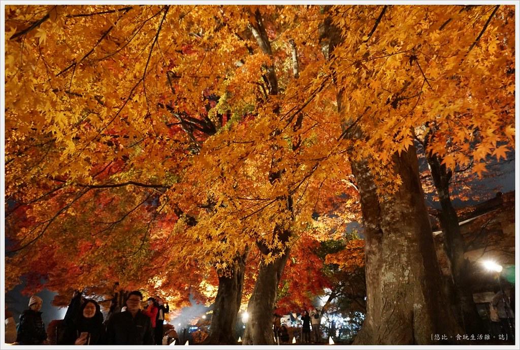 紅葉迴廊-紅葉祭-夜楓-17