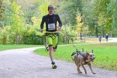 TRÉNINK: Běh bez námahy? Zapřáhněte psa