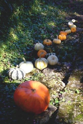 Pumpkin Farandole