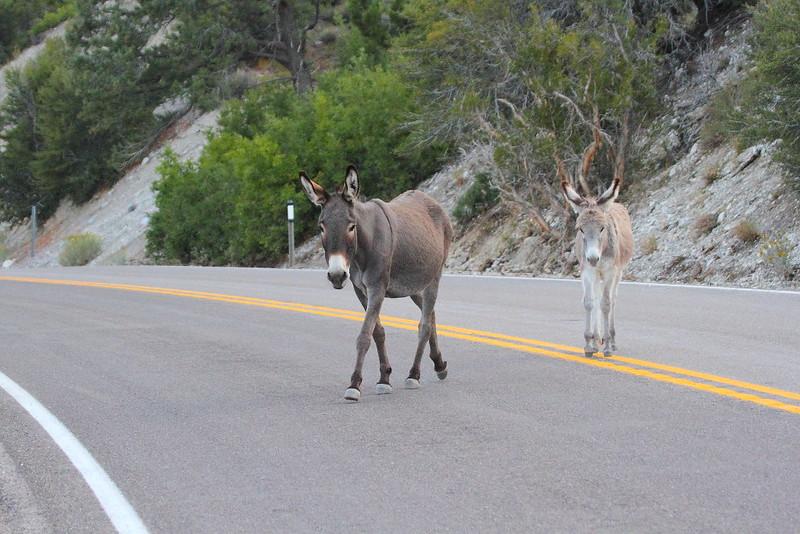IMG_4309 Burros Crossing Road