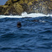 Small photo of Seal in the Atlantic