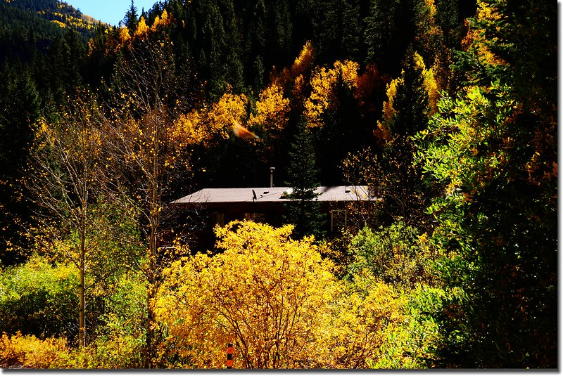 Fall colors, Mount Evans Scenic Byway, Colorado (24)