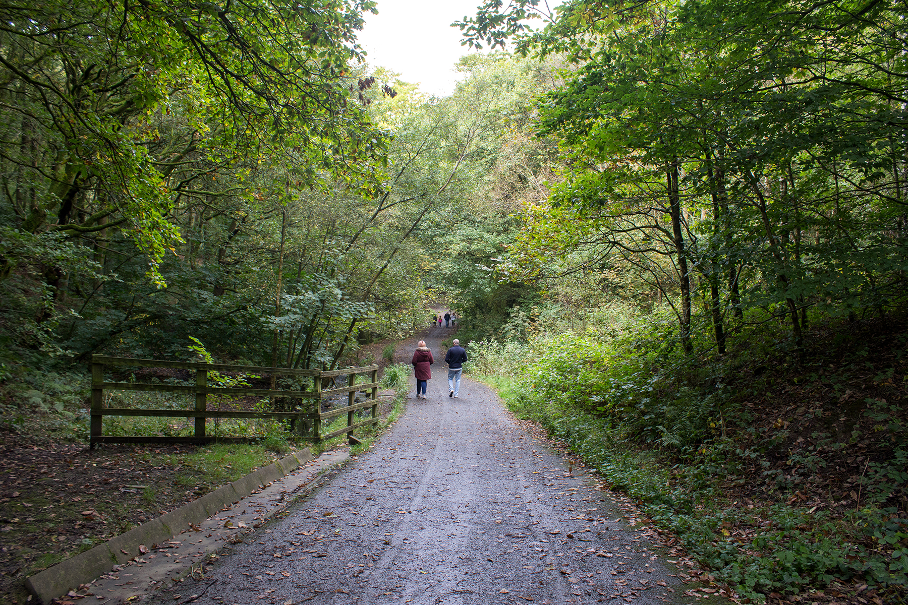 Woodland Walk to Haigh Hall | Walking In