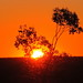 Small photo of Lightning Ridge Sunset