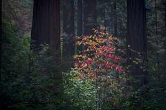 KingsCanyon-SequoiaNatParks-9340