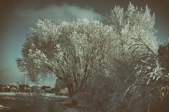 Sherwood Park January 24, 2017 D7200