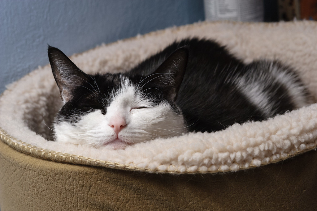 Our cat Scout sleeping in her cat bed shortly after our other cat Templeton died