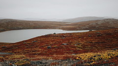 Kangerlussuaq autumn tundra