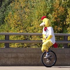 Cycling Chicken