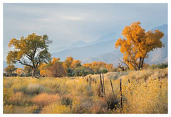 sunrise owens valley