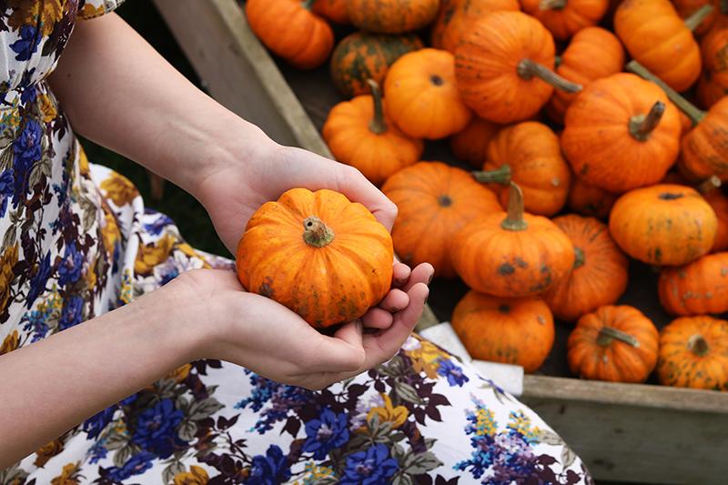Adora Mehitabel Pumpkin Patch 7