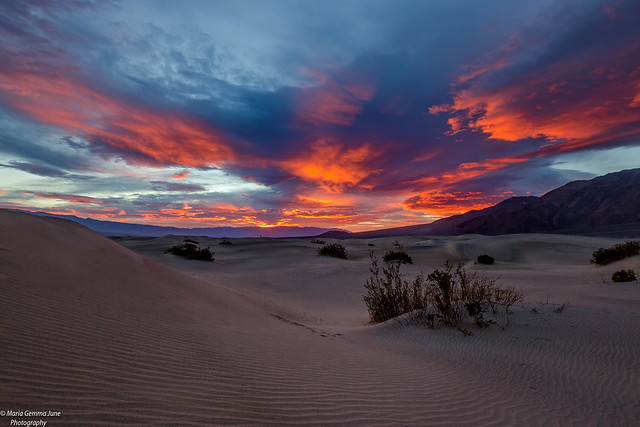 Early Morning on the Sand Dunes