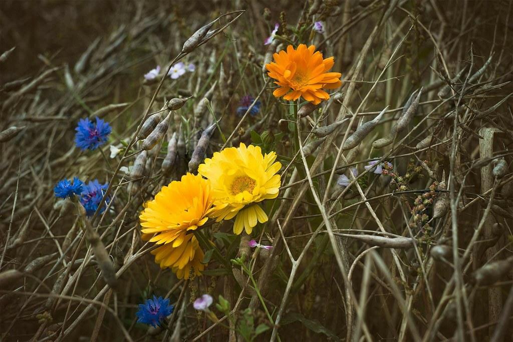 Flickr Photos Tagged Herbstblumen Picssr