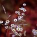 little fall flowers