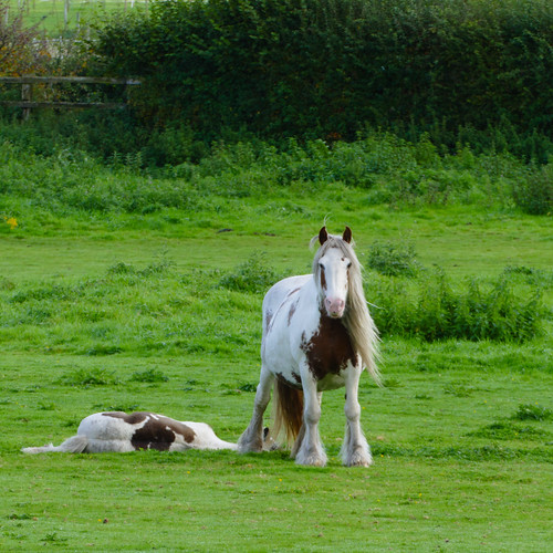 Horse and foal, Himley