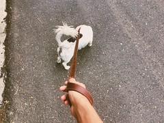 #Dog #RepublicaDominicana #RD #Joman #Jamon #Street #Person