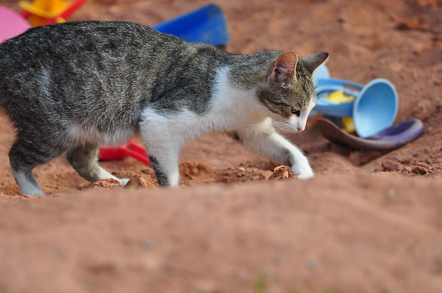 Farm Cat 3