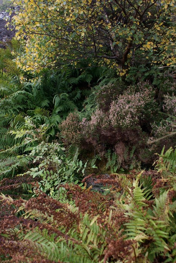 Une dernière tranche de nature de l'île d'Arran.