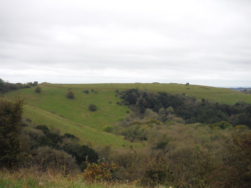 Old Winchester Hill (Ditch, Bank and Barrows) from across the coombe