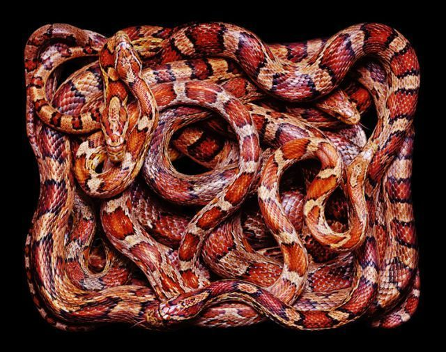 snake_art_25