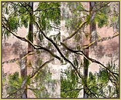 foliage (1)